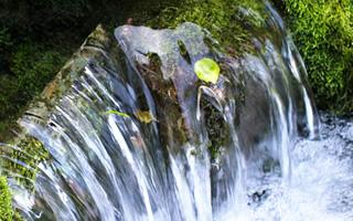 良質な水質を誇る人吉球磨の水